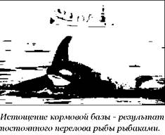 Косатка Orcinus orca Orca or Killer whale